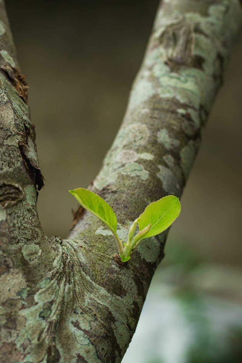 green leaf on brown tree trunk